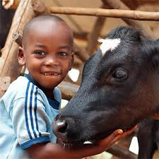heifer international farm animals donation heifer international charity ending