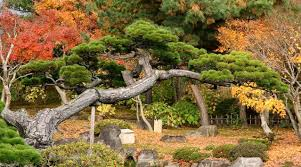 imagenes de jardines japones jardines japoneses google search pinteres