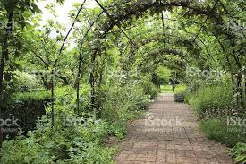 Grape Vine Pergola by Metal Pergola Arch Espalier Apple Trees Grape Vines Brick Pathway