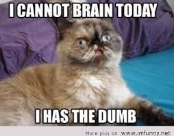 Brain Memes - brain meme