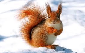 9619 winter animal widescreen desktop wallpaper walops com
