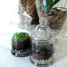 succulent terrariums how did you make this luxe diy
