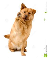 dog high five royalty free stock images image 2900499