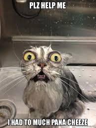 Plz Meme - plz help me i had to much pana cheeze cat bath make a meme