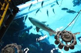 tour shark tank golden nugget las vegas