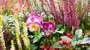 herbstbepflanzung balkon kübel und balkonkästen herbstlich bepflanzen ndr de ratgeber
