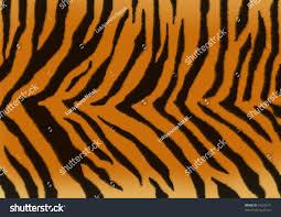 texture background fluffy skin tiger stock illustration 10323571