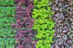 leafy green ornamental plant stock images 987 photos