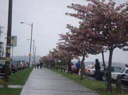Hamilton Viewpoint Park West Seattle Washington by Seattle Skyline From West Seattle Mapio Net