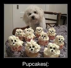 Birthday Cake Dog Meme - 8 best angus birthday images on pinterest birthdays doggies and
