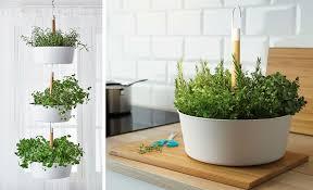 indoor garden idea hang your plants from the ceiling u0026 walls
