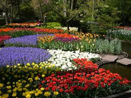 beautiful flower gardens of the world decorating clear