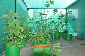 terrace gardening terrace gardening hdpe plant bags at rs 35 bag sankari