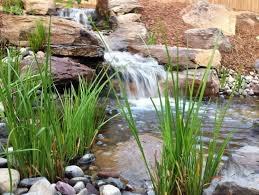 towson baltimore county md maryland backyard fish pond ideas