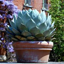 drought tolerant plants u2013 smartseeds