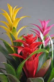 Tropical Potted Plants Outdoor - best 25 indoor tropical plants ideas on pinterest tropical