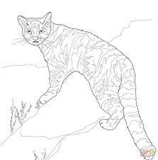 andean mountain cat coloring page free printable coloring pages