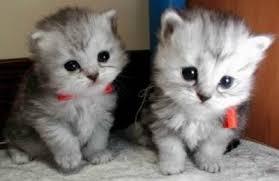 Cute Cat Meme Generator - really cute cats meme generator