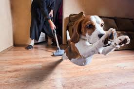 how to prevent dogs from scratching wood flooring