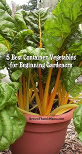 Gardening Vegetables For Beginners by 25 Best Container Vegetable Gardening Ideas On Pinterest
