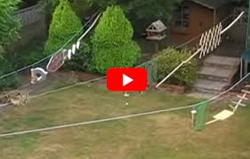 guy builds ninja warrior course in his backyard for the