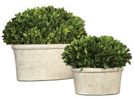 Preserved Boxwood Topiary Trees Uttermost 2 Piece Oval Domes Preserved Boxwood Plant Set In