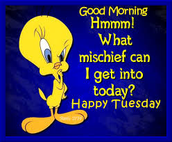 tweety bird good morning happy tuesday pictures photos