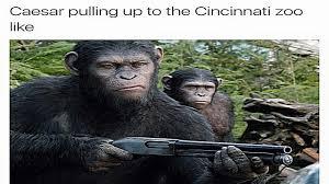 Gorilla Meme - harambe the gorilla dank meme compilation youtube