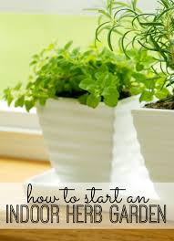 Our Favorite Plants How To by How To Start An Indoor Herb Garden Indoor Herbs Herbs Garden