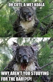 Angry Koala Meme - evil entrapment koala memes quickmeme