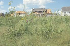 grassland native plants landscape design archives dyck arboretum