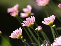 Cute Flower Wallpapers - 30 lovely wallpapers and pictures of flowers