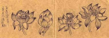 drawing lotus flowers