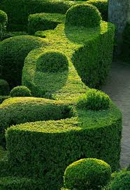 boxwood prune king garden designs