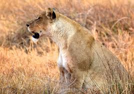 botswana victoria falls south africa moremi game reserve