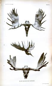 moose antler print public domain maxfield master bedroom
