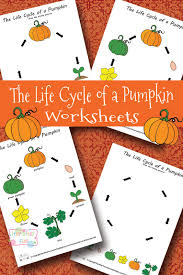 life cycle of a pumpkin worksheet life cycles worksheets and
