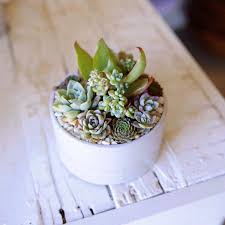 Small Desk Plants by 15 Best Plant Images On Pinterest Gardening Landscaping And Plants