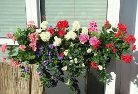 balkon grã npflanzen balkonpflanzen 8 im kasten kunstpflanze de