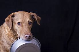Causes Of Sudden Blindness In Dogs Diabetes In Dogs Symptoms Causes Diagnosis U0026 Treatment