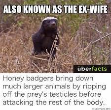 Honey Badger Memes - also known as the ex wife honey badger meme http jokideo com
