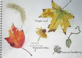 7 best botanical sketches images on pinterest botany plants and