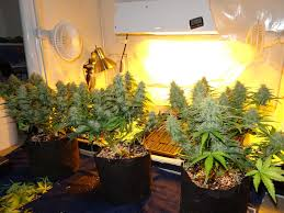 250 watt hps grow light grow 4 7 oz with a 250w hps beginner tutorial grow weed easy