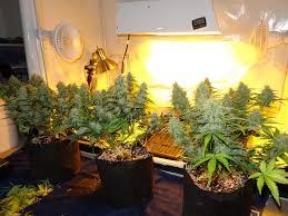 best hps grow lights 5 reasons hps grow lights still dominate grow weed easy