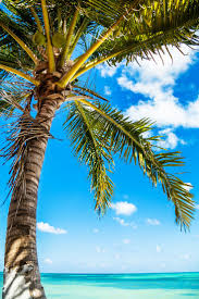 168 best palm tree love images on pinterest palm trees palms mexico beach travelbeach themestropical paradisesummer vibessurfingmexicansphsoutheast asiawall murals