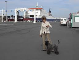 affenpinscher zucht deutschland kerry blue terrier kennels loukerry de