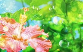wallpaper animasi tablet bunga animasi