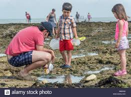 a father and his children on the beach with sieves searching for