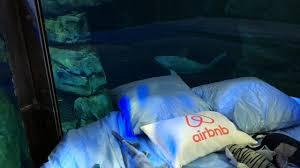 chambre aquarium une chambre airbnb immergée au milieu de 35 requins golem13 fr