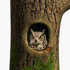 promo code for ballard designs best free home design idea promo code for ballard designs 28 pics photos owl tree with 022 barn owl in tree